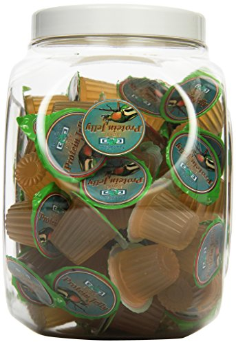 Namiba Terra 0303 Beetle und Insect Protein-Fructose Jelly Thekenaufsteller, 75-er Cookie BarBox