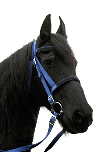 JF-Reitsport Trense Nylon mit Zügel ohne Gebiss Full, Royal Blue, Warmblut, AINB-98-01-04